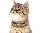 Kitten — Stockfoto