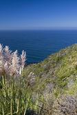 Coastal view, Pacific coast of California — Stock Photo