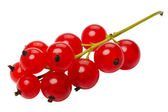 Red currant berries, isolated on a white background — Stock Photo
