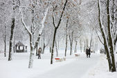 Winter landscape in the city — Stock Photo