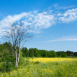 Stockfoto: Spring landscape with dry tree