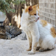 Stray cats in Jerusalem. - Stock Photo