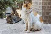 Stray cats in Jerusalem. — Stock Photo