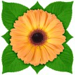 Stock Photo: One orange flower with green leaf