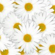 Abstract background of white flowers — Stock Photo