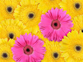Abstract background of yellow and pink flowers — Stock Photo