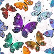 Seamless white pattern with butterflies — Stock Vector