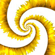 Sunflower spiral — Stock Photo #5223227