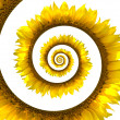 Sunflower spiral - Foto Stock