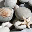 Starfish and shell — Stock Photo