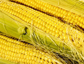 Fresh taste corn — Stock Photo