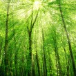 Stock Photo: Sunlight in trees of green summer forest