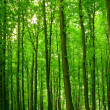 Forest — Stock Photo #5210513