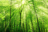 Sunlight in trees of green summer forest — Stock fotografie