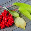 Viburnum shrub with red berries - Stock Photo