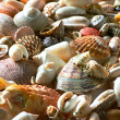 Sea shells and pebble beach - Stock Photo
