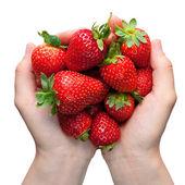 Strawberries in hands — Stock Photo