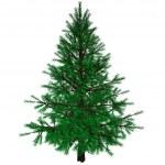 árvore de Natal nua — Foto Stock