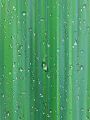 Water drops on green background — Stock Photo