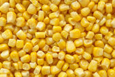 Sweetcorn closeup background — Stock Photo