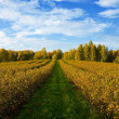 Autumn agricultural landscape — Stock Photo