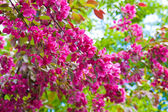 Colors of spring — Stock Photo