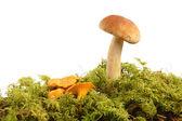 Mushrooms bunch — Stock Photo