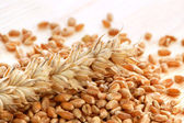 Wheat with seeds — Stock Photo