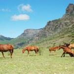 Horses — Stock Photo #4751026