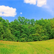 Stock Photo: Forest edge