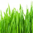Fresh green grass — Stock Photo #4389327