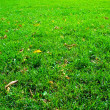 Fresh green grass — Foto de Stock