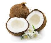 Coconut with jasmine — Stock Photo