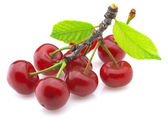 Sweet cherry — Stock Photo