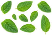 Leaves of mint — Stock Photo