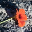 Stock Photo: Flower from ashes