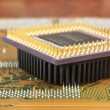 Silicon chip — Stock Photo