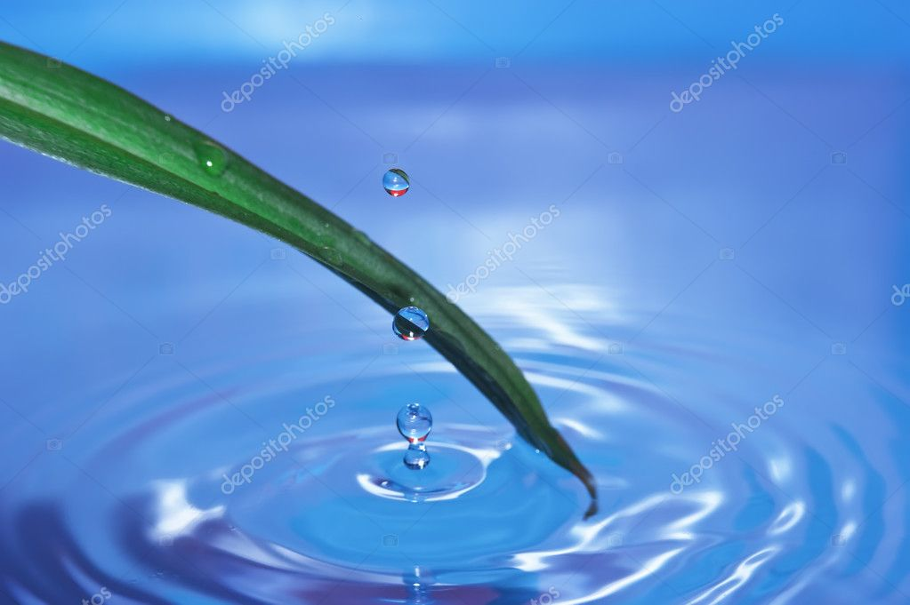 Drop of water drops on green leaf  Stock Photo #5201821