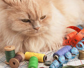 Cat and supplies — Stock Photo