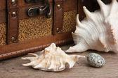 Peito e concha — Fotografia Stock