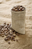 Coffee grains in bag on sacking — Stock Photo