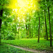 Sun on glade in forest - Stock Photo