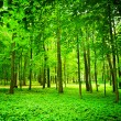 Green forest — Stock Photo #5074288