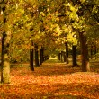 Autumn park — Stock Photo #5074835