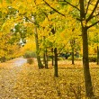 Autumn yellow alley — Stock Photo