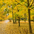 Autumn yellow alley - Stock Photo