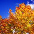 Colored autumn tree — Stock Photo
