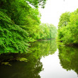 Stock Photo: river in forest