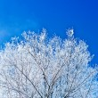 Stock Photo: Image of crone snowed tree with copyspace
