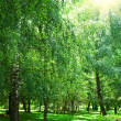 Green park with sun — Stock Photo